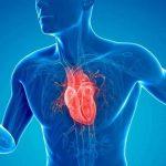 Heart Healthy Tips for Seniors