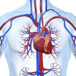 Cardiology Specialist Doctor