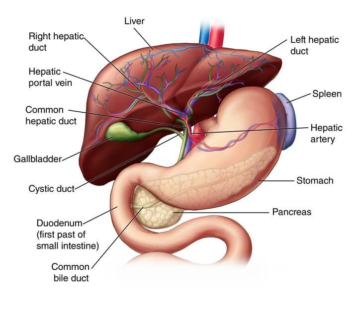 Liver Specialist Doctor